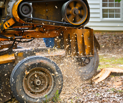 stump removal Sydney